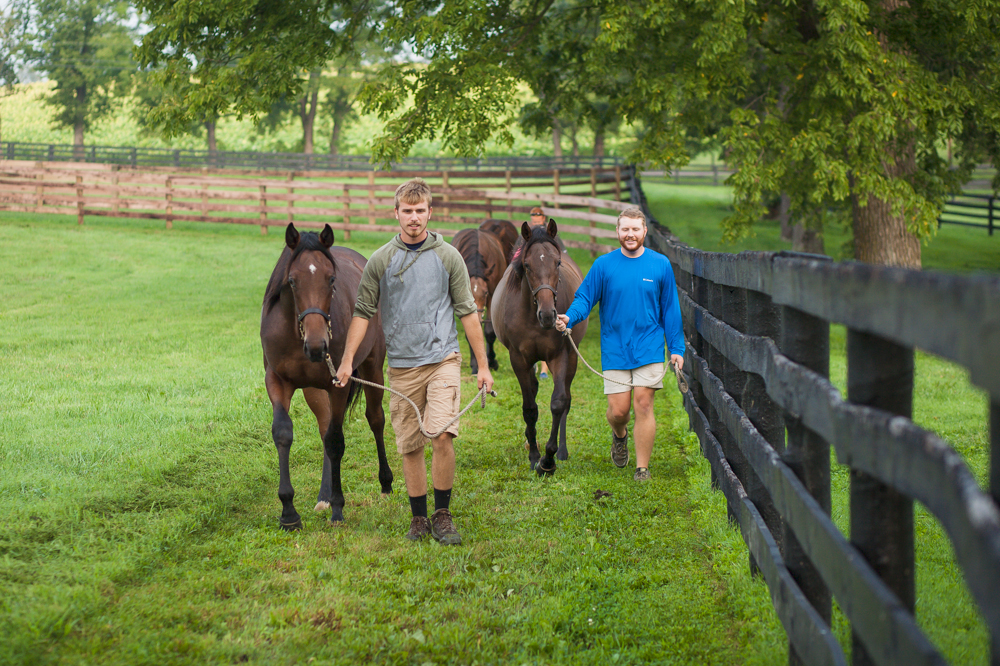 Yearling Prep 2018
